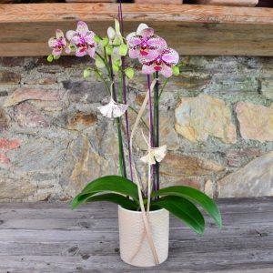 Lila Orchidee im Topf